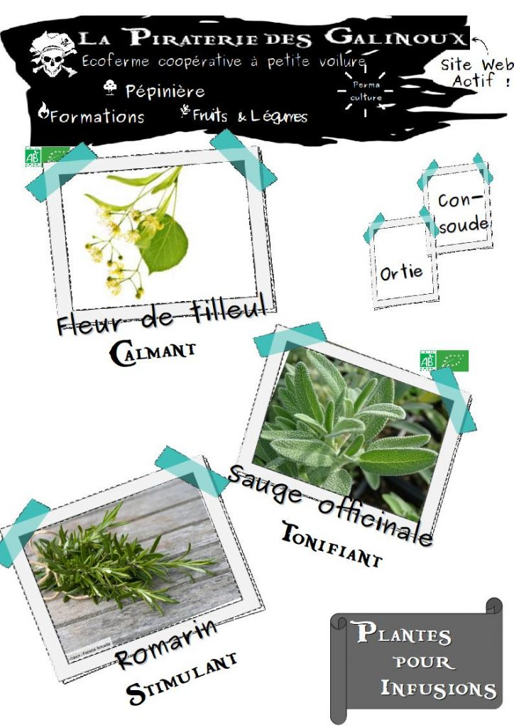 Plantes infusions